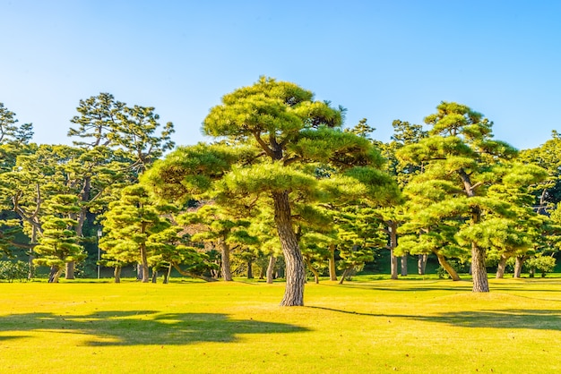 Árbol de los bonsais en el jardín del palacio imperial en la ciudad de tokio japón