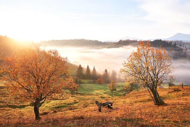 Árbol brillante en la ladera de una colina con vigas soleadas en el valle de la montaña cubierto de niebla.