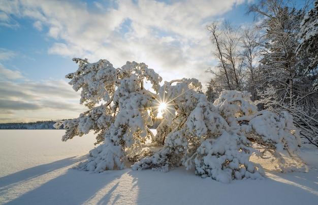Un árbol caído en la nieve y la luz del sol en un lago congelado.