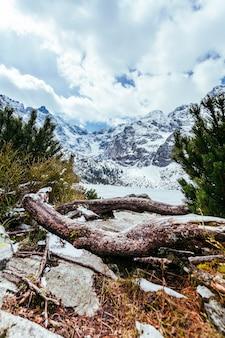 Árbol caído con paisaje nevado