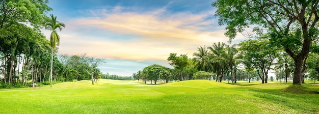 Árbol en campo de golf