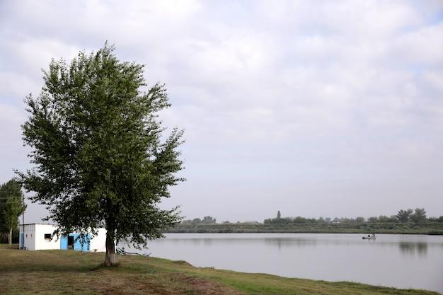Árbol cerca de la cabaña en la orilla del lago