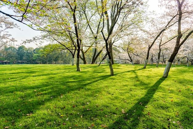 Árbol y césped