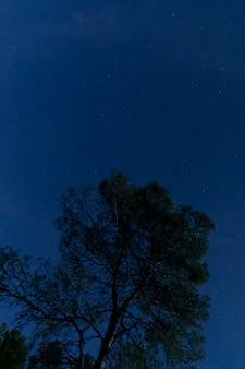 Árbol con cielo estrellado