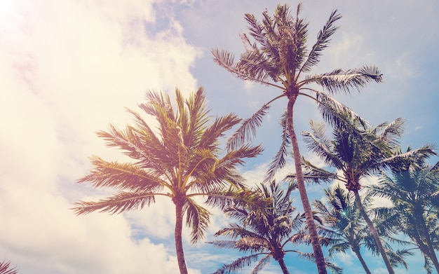 Árbol de coco en la playa, árbol en la playa, palma en la playa, vintage de la playa, playa retra.