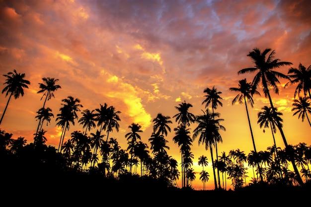 Árbol de coco en la playa en la puesta del sol.