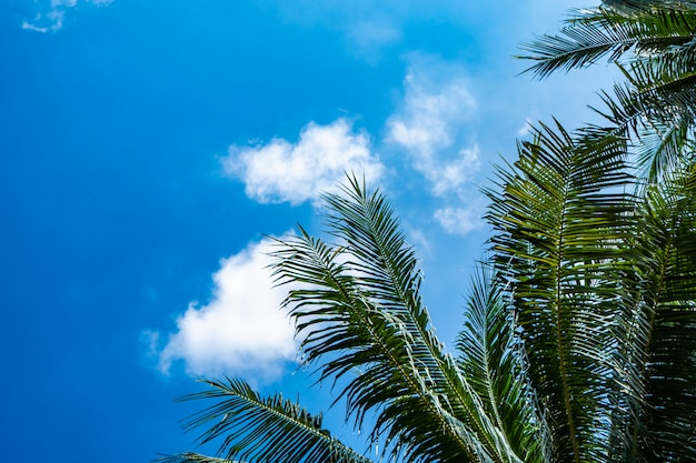 Árbol de cocos con cielo despejado en concepto de vacaciones de verano