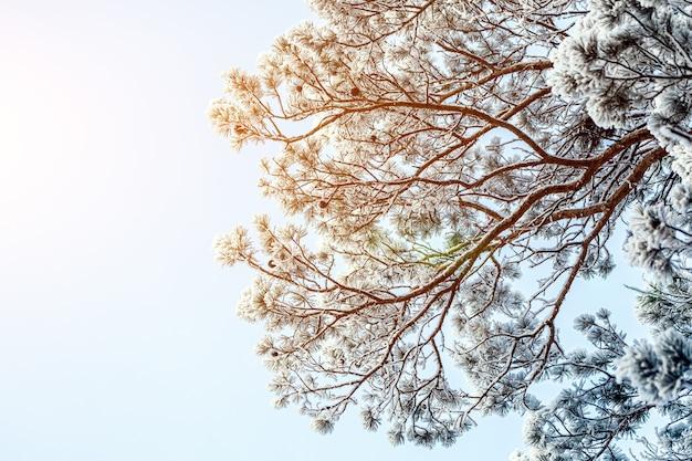 Árbol congelado en el cielo blanco de invierno. día helado, tranquila escena de invierno. gran vista del desierto.