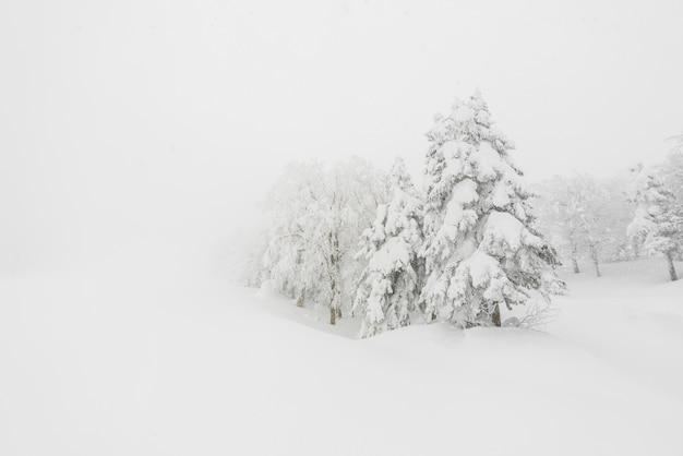 Árbol cubierto de nieve en el día de la tormenta de invierno en las montañas del bosque