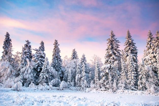 Árbol cubierto de nieve de invierno mágico