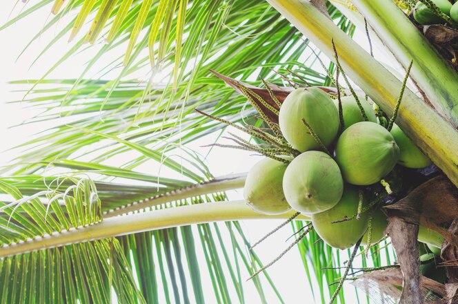árbol de coco con cielo