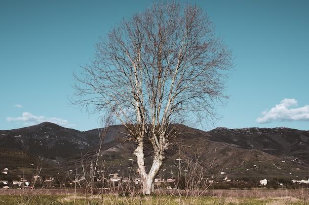 Árbol desnudo en un campo con montañas