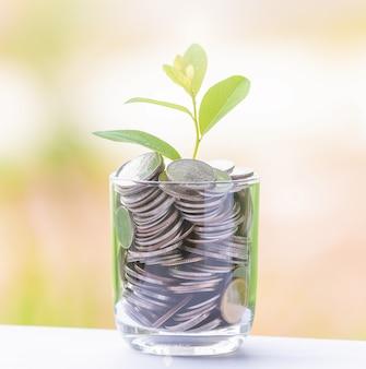 Árbol de dinero con monedas para hacer crecer su negocio.