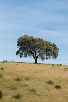 Árbol de encina solitario