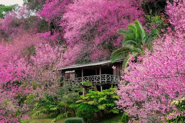 Árbol de flor de cerezo rosa primavera en día soleado con rayo de sol, flor de sakura florece