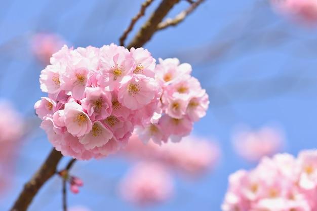 Árbol de flor. fondo de naturaleza en un día soleado. flores de primavera. hermoso huerto y abstracto borrosa