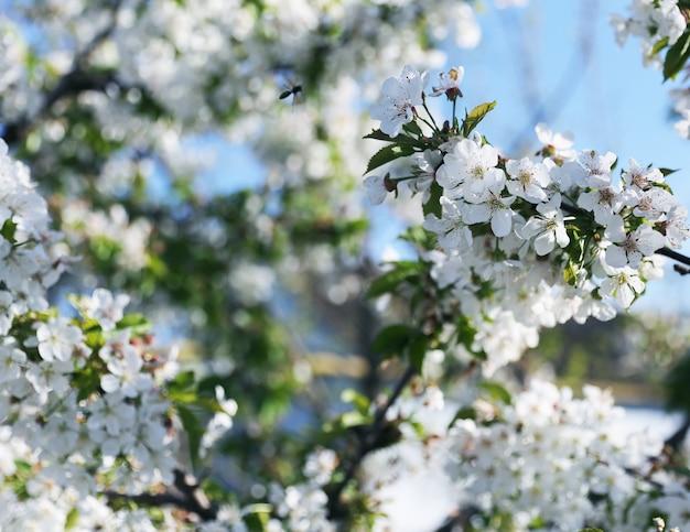 Árbol floreciente en el cielo