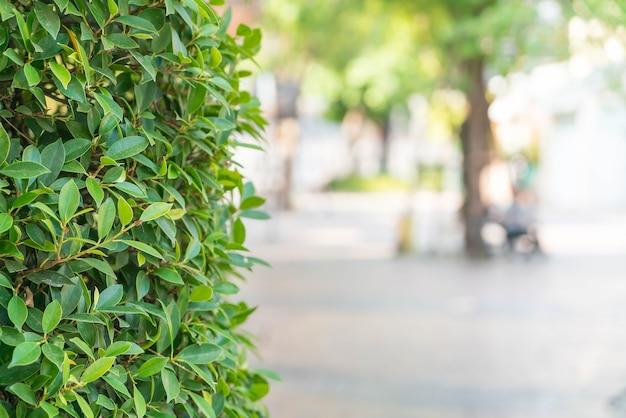 Árbol con fondo borroso