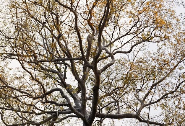 Árbol grande y aterrador con venas de rama negra contra el cielo. fondo de naturaleza