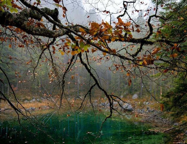Árbol con hojas de naranja y un lago zugspitze en eibsee