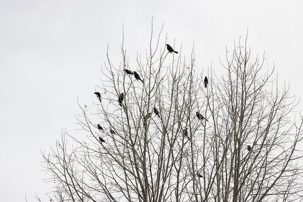 Árbol sin hojas con pájaros en las ramas.