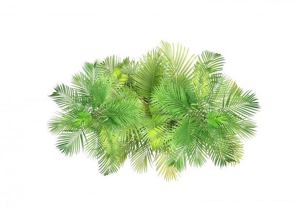Árbol de las hojas de palma de la visión superior aislado en el fondo blanco
