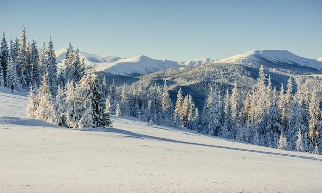 Árbol de invierno en la nieve. cárpatos ucrania. europa.