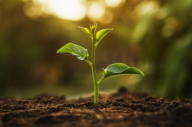 Árbol joven que crece en jardín con salida del sol. concepto ecológico día de la tierra
