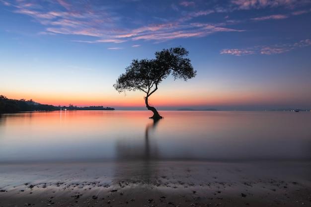 Árbol de manglar solo y amanecer de la mañana en la hermosa playa y el cielo en chumphon, tailandia.