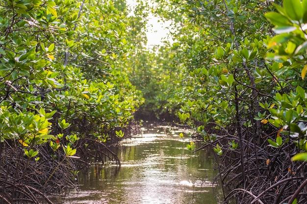 Árbol de mangle junto al mar en la isla de zanzíbar, tanzania, áfrica