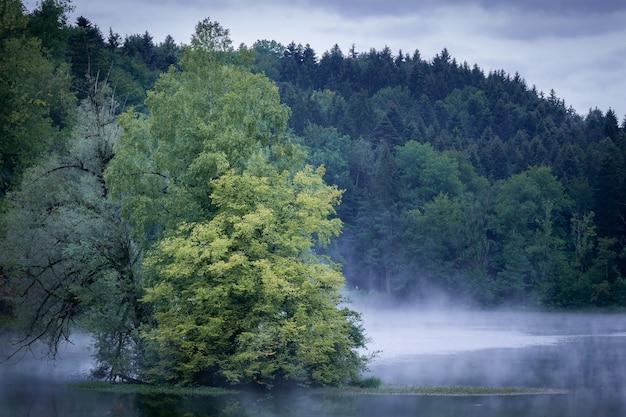 Árbol en medio del agua con una montaña boscosa