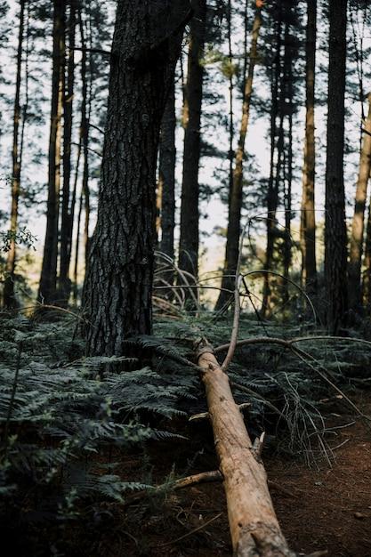 Árbol muerto en el bosque