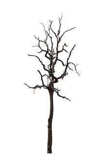 Árbol muerto o árbol seco aislado en blanco. trazado de recorte.