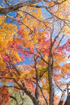 Árbol de otoño