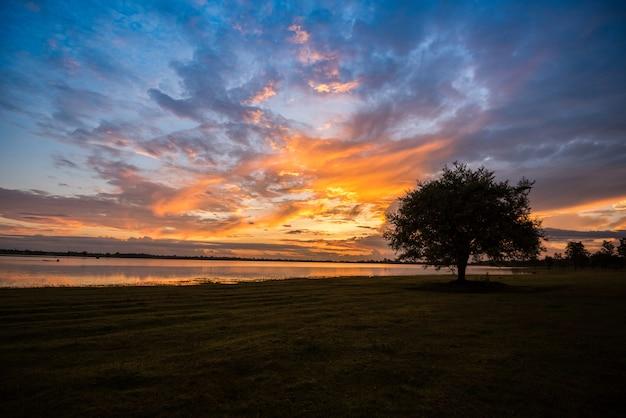 Un árbol paisaje hermoso árbol puesta de sol de pie cerca del río