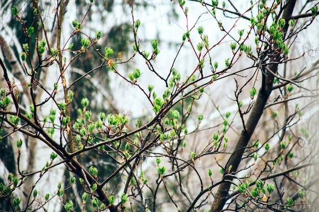 Árbol de primavera y lluvia