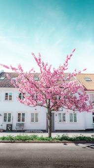 Árbol rosado que florece delante de una casa blanca