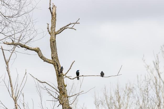 Árbol seco con pájaros en la rama.
