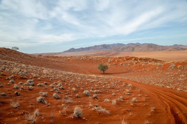 Árbol solitario en el camino del desierto - áfrica