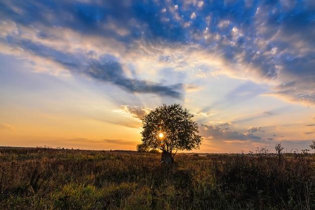 Árbol solitario en un campo contra una puesta de sol naranja en otoño