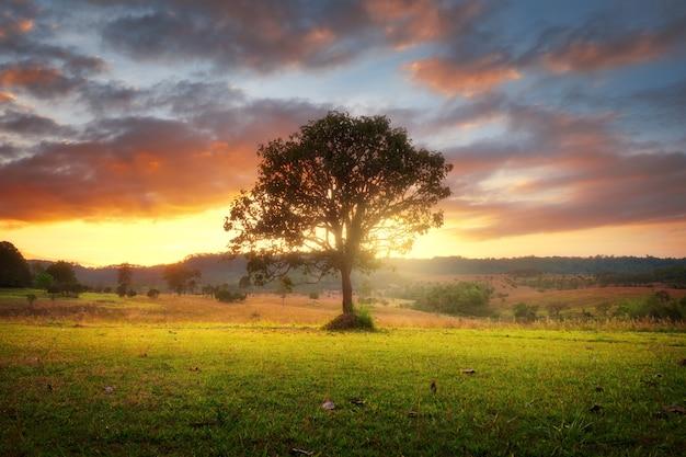 Árbol solitario en campo con hermosa puesta de sol