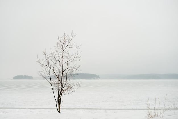 Árbol solitario en una costa de invierno e islas congeladas