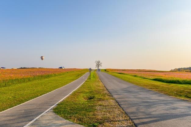 Árbol solitario con jardín cosmos y carretera en la colina