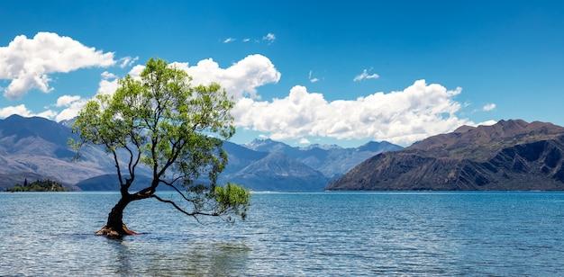 Árbol solitario en el lago en wanaka, nueva zelanda
