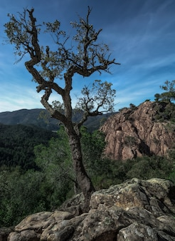 Un árbol solitario que sobrevive por encima de una roca antes de una formación rocosa y montañas lejanas, cielo nublado en españa
