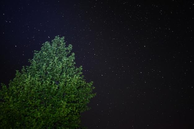 Un árbol con el telón de fondo de las brillantes estrellas nocturnas lejos de las ciudades en estado salvaje. estilo de vida de viaje de aventura. concepto pasión por los viajes.