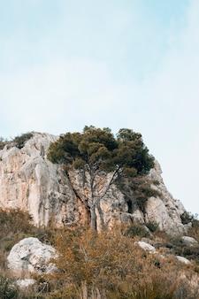 Árbol verde frente a la montaña rocosa contra el cielo azul