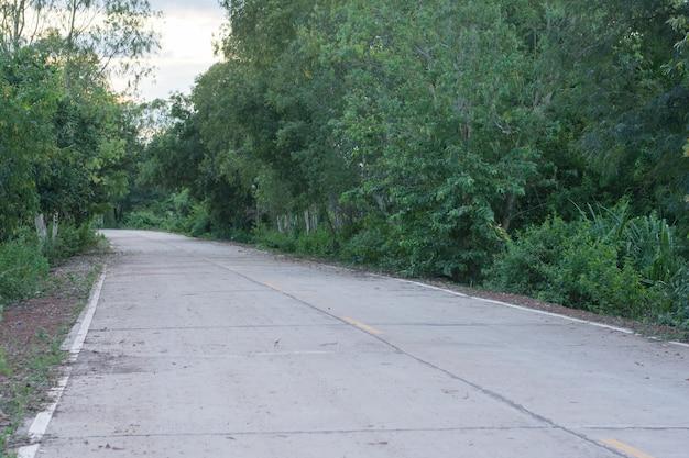 Árbol verde fresco y camino de cemento