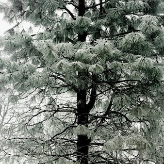 Árbol verde pastel con ramas nevadas