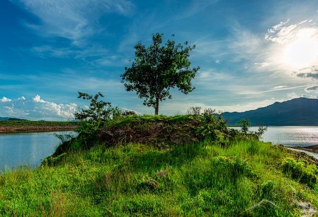 Árbol y vista del paisaje naturaleza y río y color de la luz solar